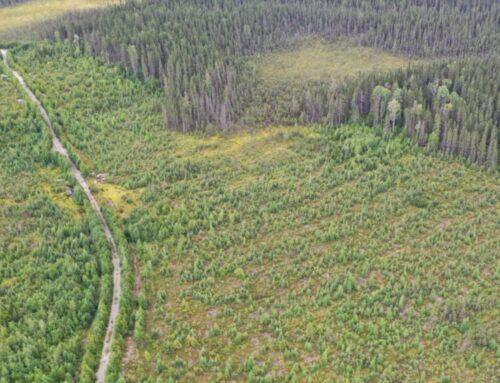 Des groupes environnementaux déplorent les pratiques du ministère des Forêts