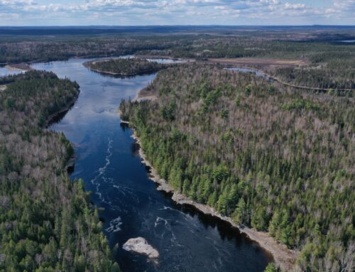 Creation of protected areas: The Ministry of Forests has obstructed